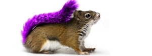 purple20squirrel_lacoa management